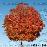 02_tree_autumn010.zip
