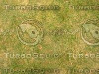 Lawn  20090119 099