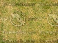Lawn  20090119 105
