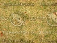 Lawn  20090119 107
