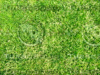 Lawn 20090405 015