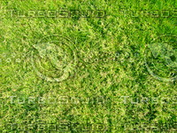 Lawn  20090405 017