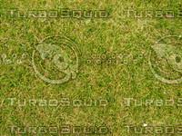 Lawn 20090530 008