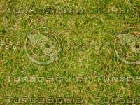 Lawn 20090530 011