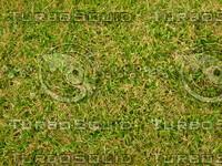 Lawn 0090530 013