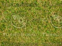 Lawn 20090530 014
