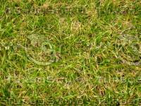 Lawn 20090530 021