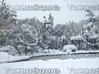 Snow Tree 20091112 033