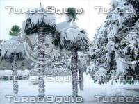Snow Tree 20091112 051