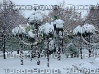 Snow Tree 20091112 143