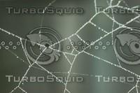 monochromspiderweb2.JPG