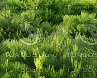 wavygreenplant.JPG