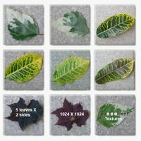 LeavesTextures.zip