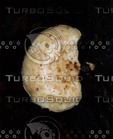 Mushroom 5.jpg