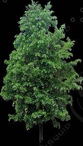 billboard tree 01