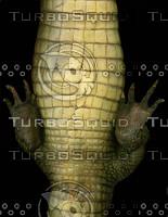 crocodile_02.jpg