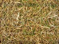 Lawn Carpet cz3 143