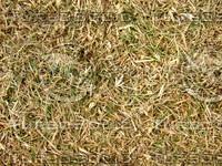 Lawn Carpet cz3 146
