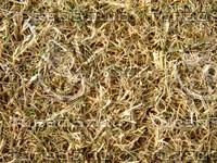 Lawn Carpet cz3 147