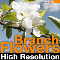Branch Flowers High Resolution