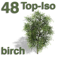 Top Views - birch