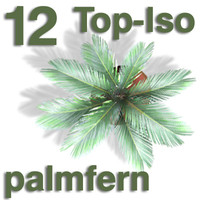 Top Views - palmfern