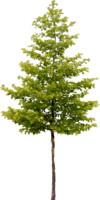 tree78