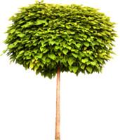 tree84