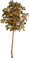 tree86