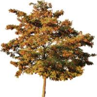 tree89