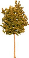 tree97