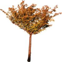 tree99