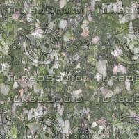 treebark-greenchip.jpg