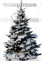 Snow covered wintertree