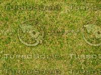 Lawn 20090530 004