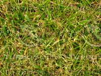 Lawn 20090530 022