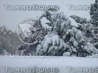 Snow Tree 20091112 025