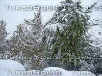 Snow Tree 20091112 029