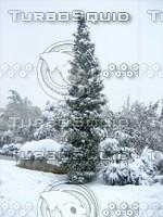 Snow Tree 20091112 034