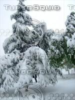 Snow Tree 20091112 037