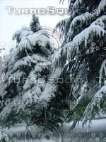 Snow Tree 20091112 045