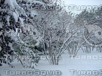 Snow Tree 20091112 049