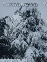 Snow Tree 20091112 061