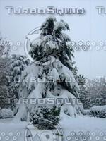 Snow Tree 20091112 063