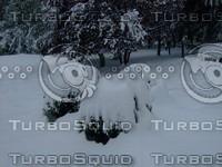 Snow Tree 20091112 073