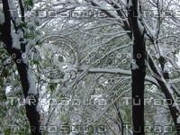Snow Tree 20091112 091