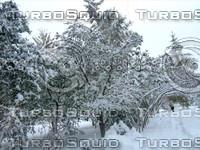 Snow Tree 20091112 093