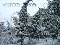 Snow Tree 20091112 096