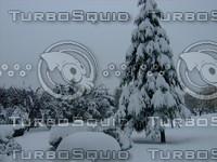 Snow Tree 20091112 132