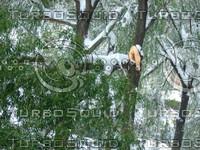 Snow Tree 20091112 134